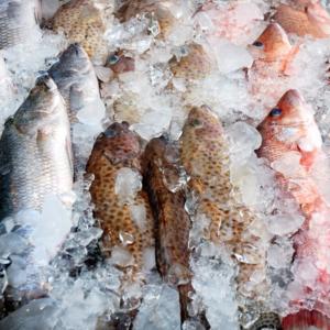 Külmutatud kalatooted